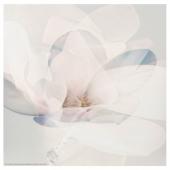 ФРИДЕНЭ Картина, цветок, 30x30 см